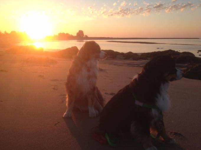 dogs-salisbury