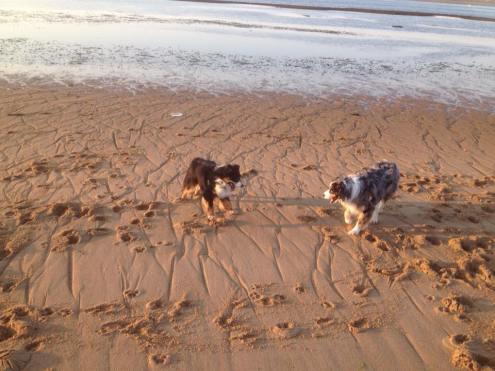 dogs2-salisbury